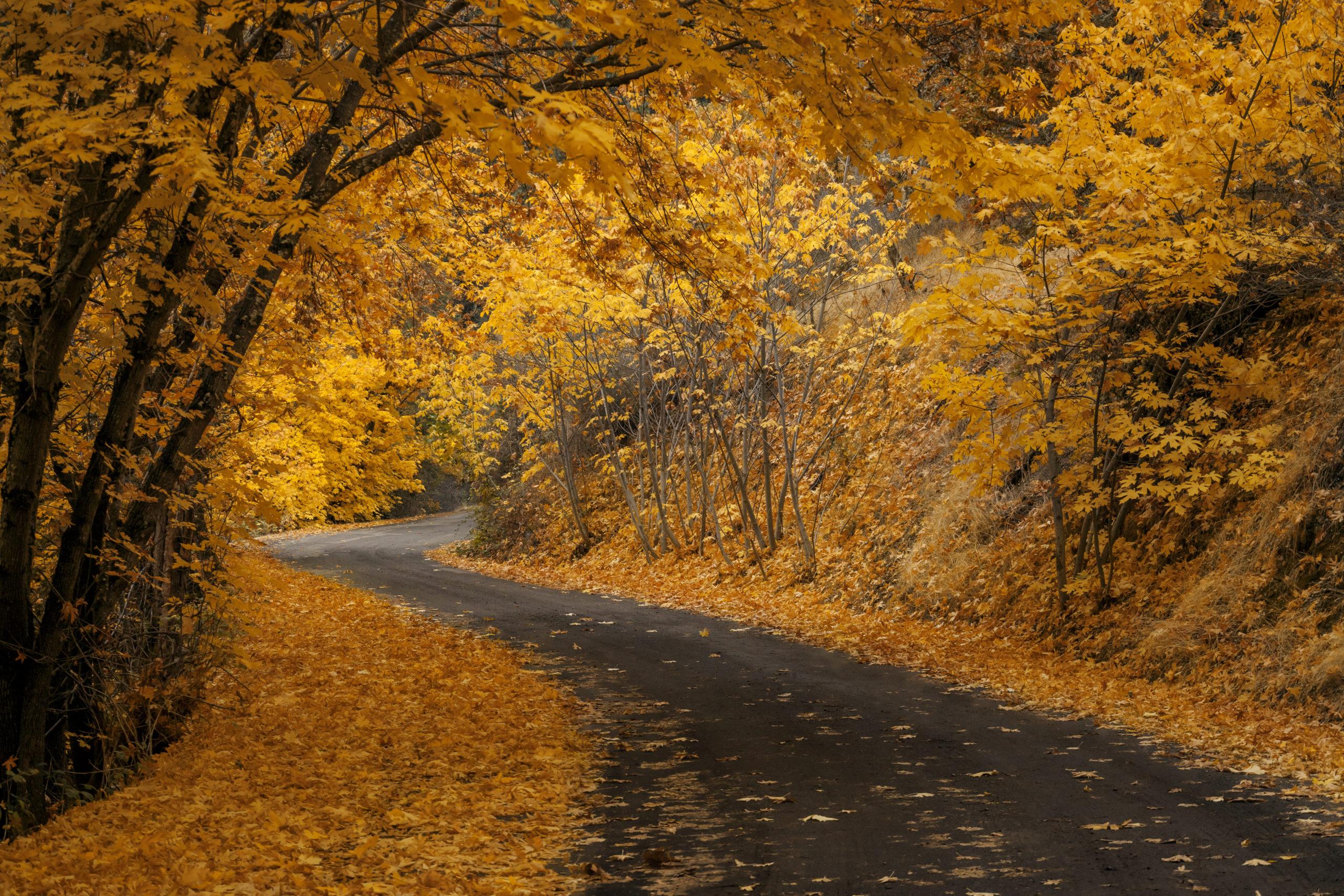 Leaves on bend in road | Oregon