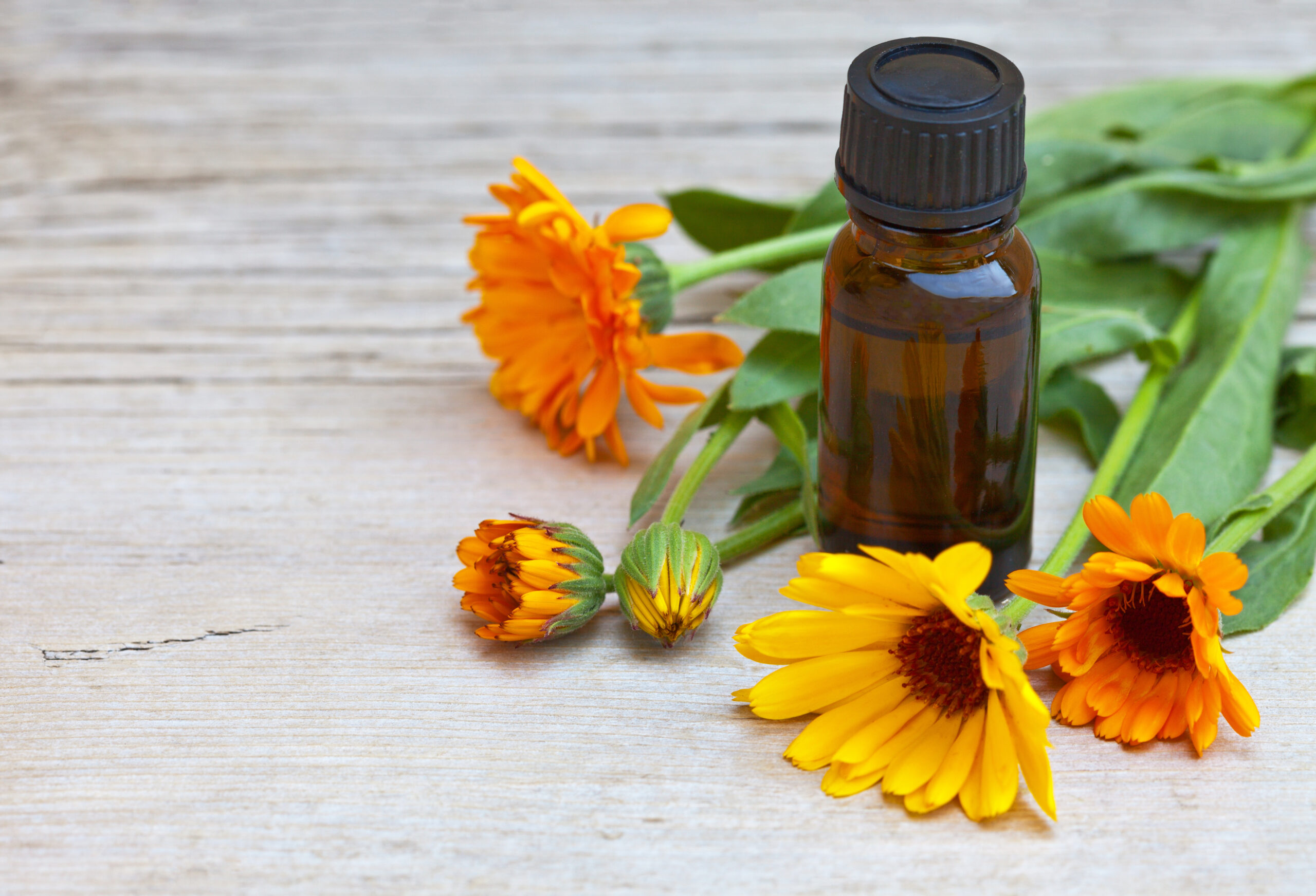 Healing bright calendula flowers and a vial with a medicinal tincture based on a marigold plant. Place for text. Close-up view
