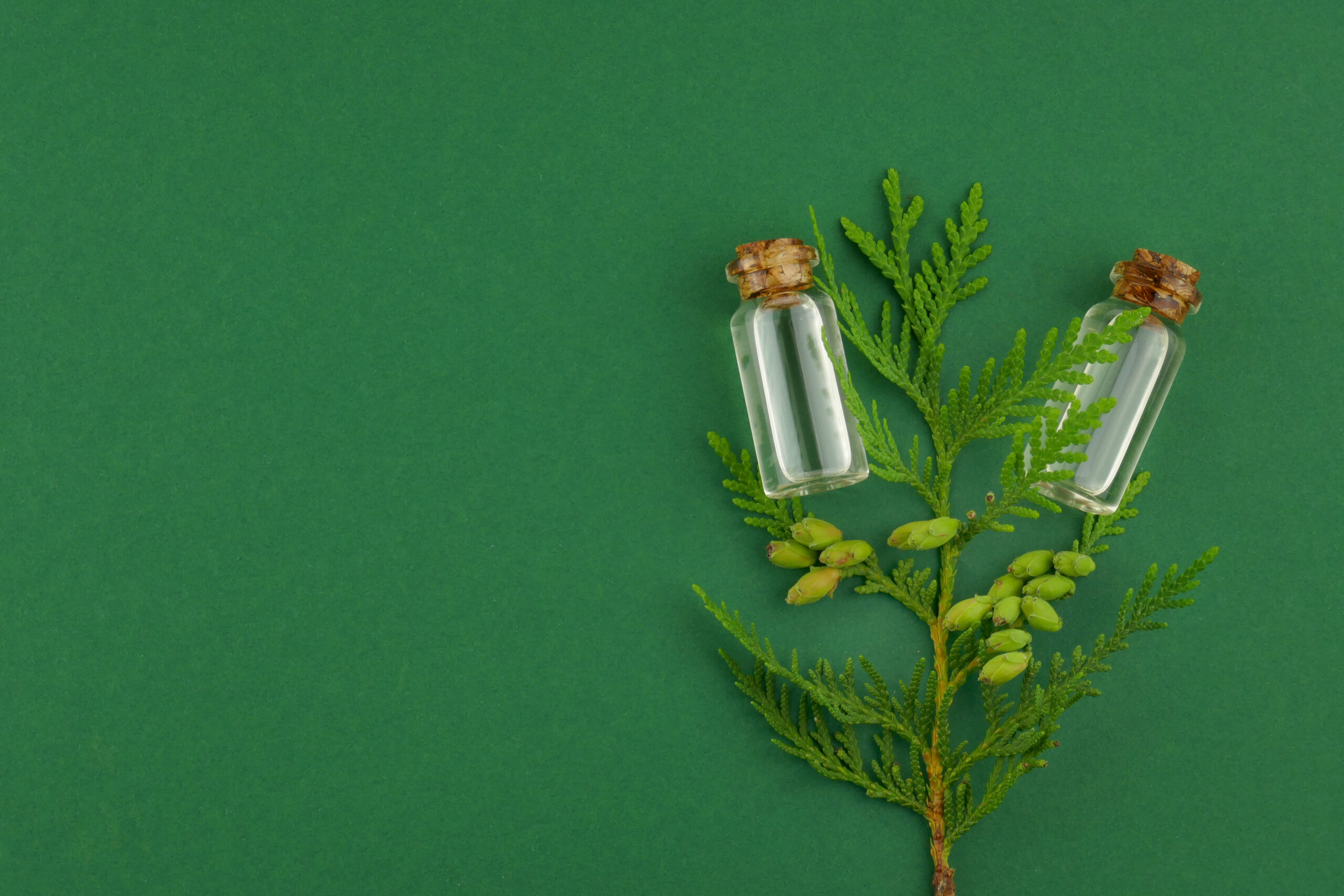 Thuja essential oil.Natural thuja oil set in glass bottles and a sprig of thuja on a dark green background
