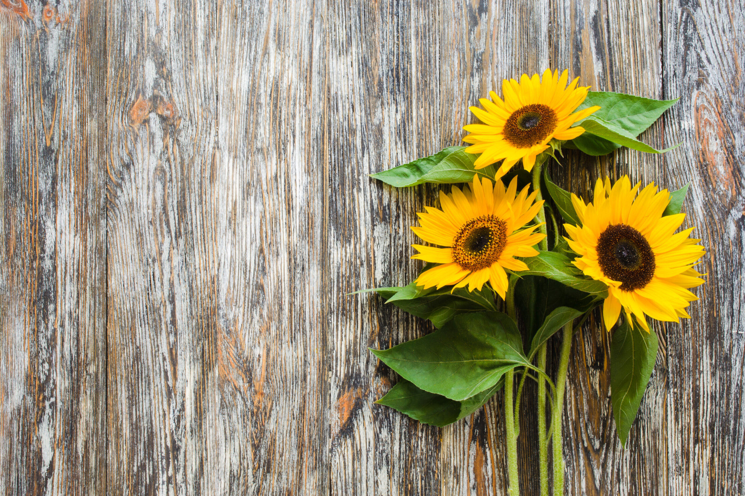 Autumn background with a bouquet of yellow sunflowers on vintage textured wooden table.